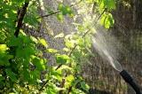 Kurzfristige Verlängerung von mehreren Pflanzenschutzmitteln im Forst
