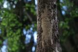 Massiver Schwärmflug: Forstministerin Michaela Kaniber warnt vor Borkenkäfer-Gefahr