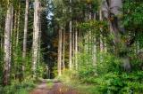 Klöckner stellt Waldstrategie 2050 vor