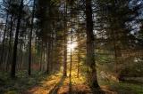 Hilfe für Kleinprivatwaldbesitzer: Ministerin Michaela Kaniber erwirkt Ausnahmeregelung bei Einschlagsbeschränkungen
