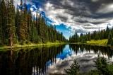 Waldbericht 2020