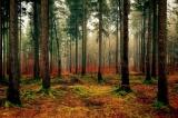 BiWa 2020 - Bildungsprogramm Wald der Bayerischen Forstverwaltung