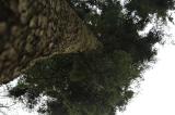 Fichten- und Tannenwirtschaftswälder durch den Waldbau auf Trockenheit vorbereiten