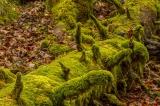 Totholz hilft Wiederbewaldung