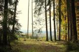 Waldeigentümer werden mit 500 Millionen Euro unterstützt