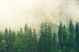 Ergebnisse Waldzustandserhebung 2020